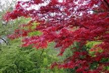 16 september bomenwandeling met IVN Cuijk